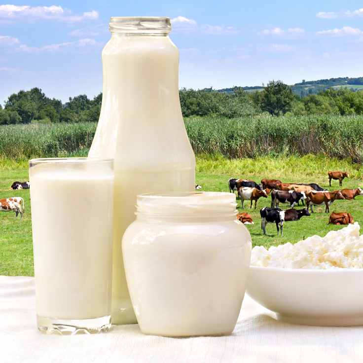 Image collection of dairy products